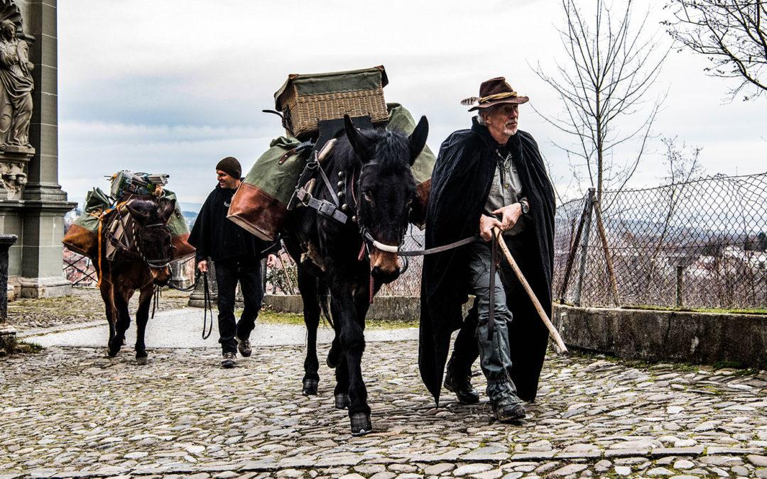 Deux mulets sur la route jusqu'à Charmey
